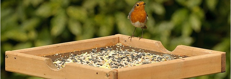 Bird Tables & Bird Baths