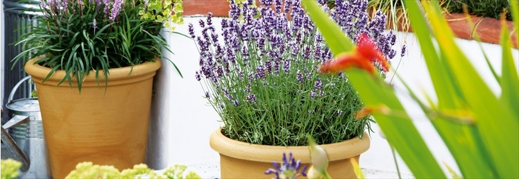 Garden Pots, Planters, Hanging Baskets & Urns