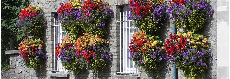 Hanging Baskets Window Bo Hayracks