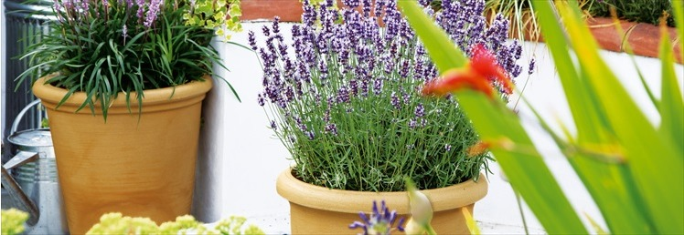 Planters and Pot Holders