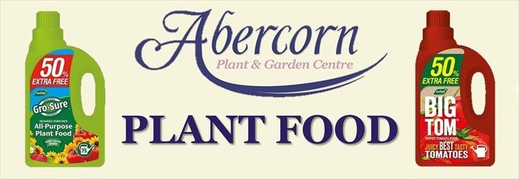 Abercorn - Plant Food