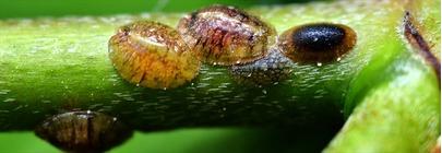 Weed, Pest & Disease Control