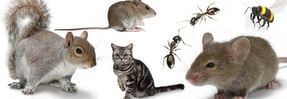 Pest Control and Deterrence