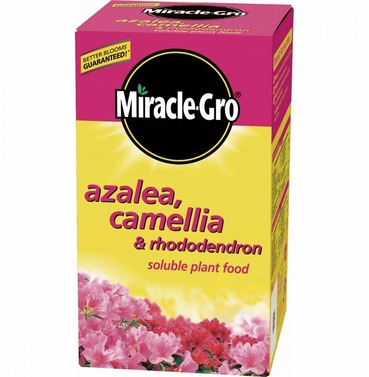 Azalea & Camellia Food - Miracle Gro Water Soluable