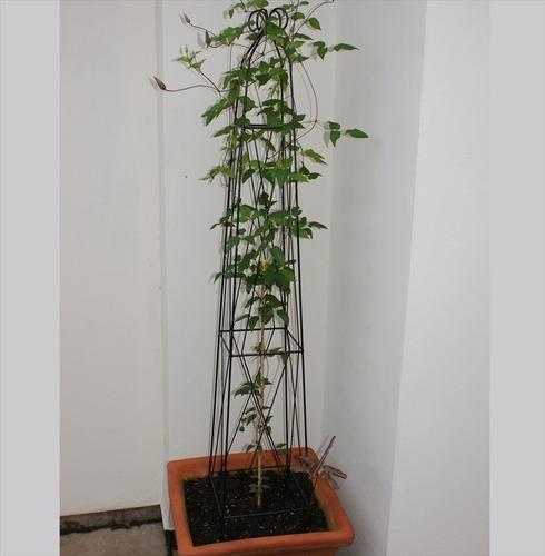 Cranford Obelisk - Plant Support - Poppy Forge