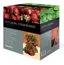 Let's Grow Strawberry / Herb Planter