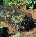 Grow Tunnel Cloche Kit - 3m - Netting Cover