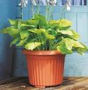 Corinthian Round Planter 40cm - Terracotta - Lightweight