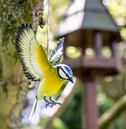 Hanging 3d Metal Blue Tit in Flight - La Hacienda