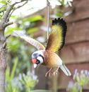 Hanging 3d Metal Goldfinch in Flight - La Hacienda